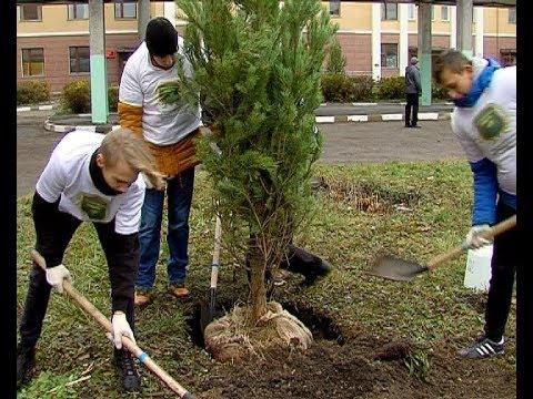 Высадка деревьев в НГКБ