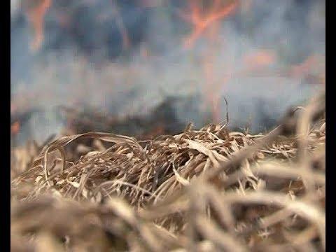 Поджоги травы