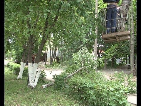 В городе продолжается опиловка деревьев